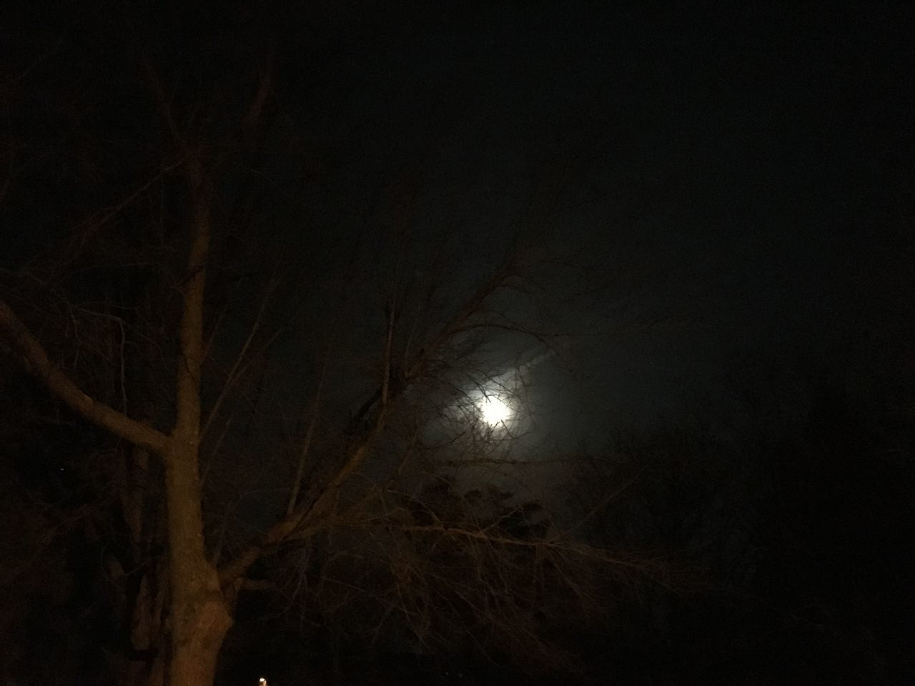 night, moon, nature, illuminated, low angle view, tranquility, beauty in nature, moonlight, no people, outdoors, branch, tree, astronomy, sky