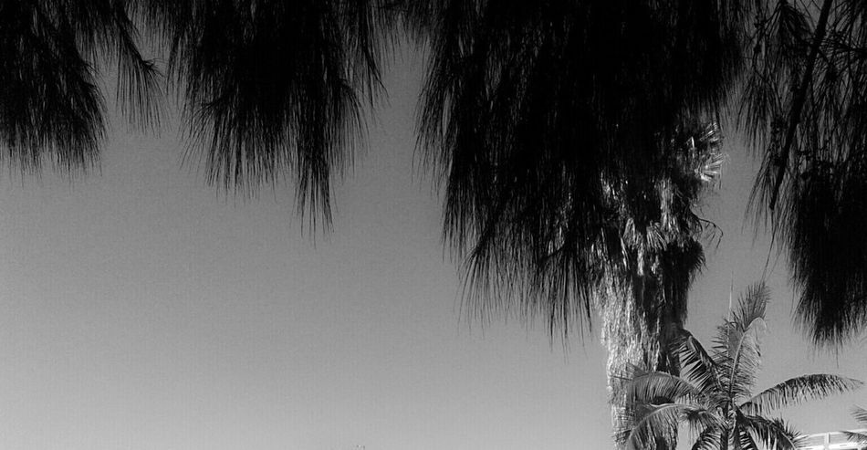 Negative Space Palm Trees Black And White