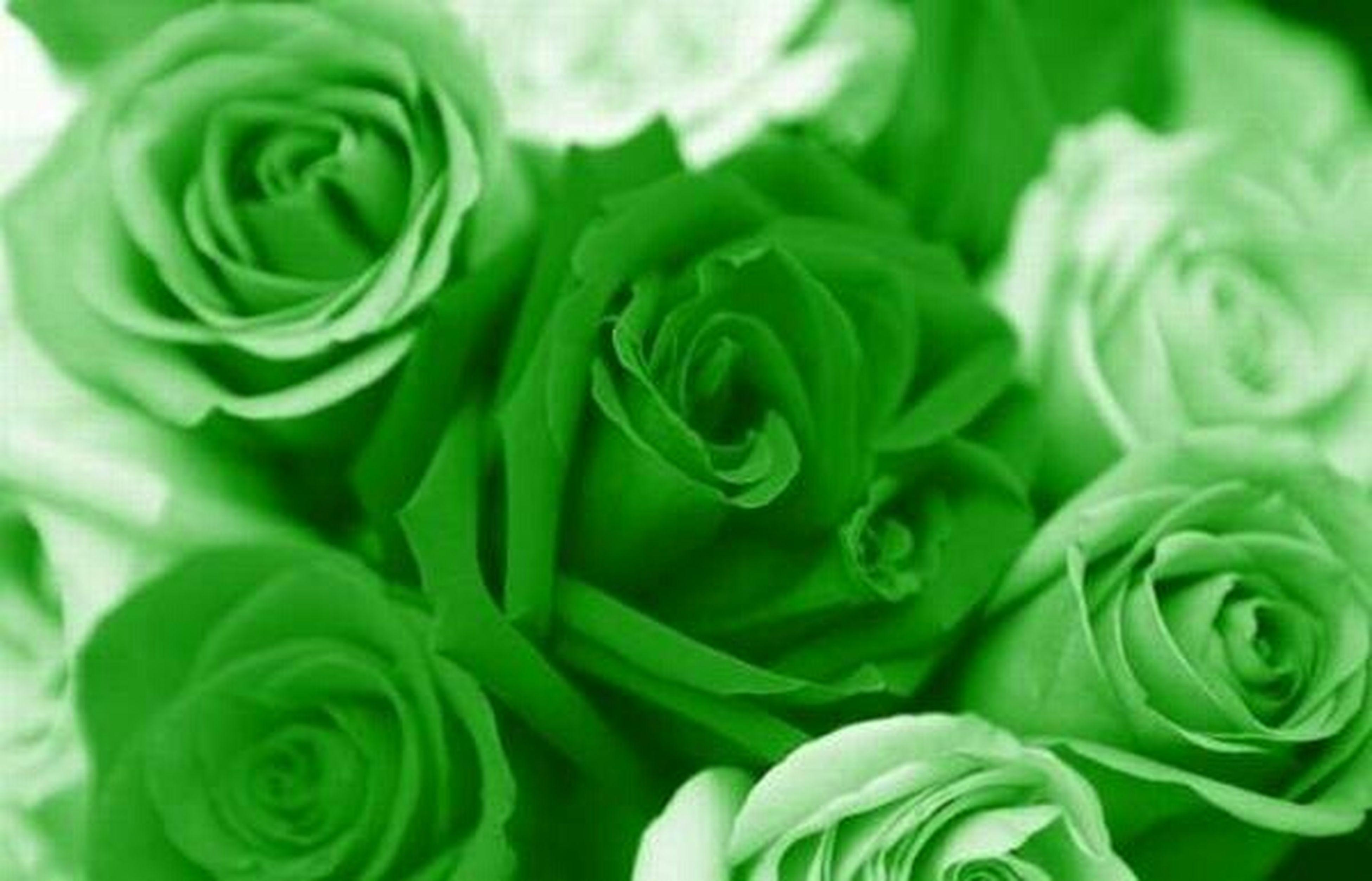 Flaweres Flor Colors