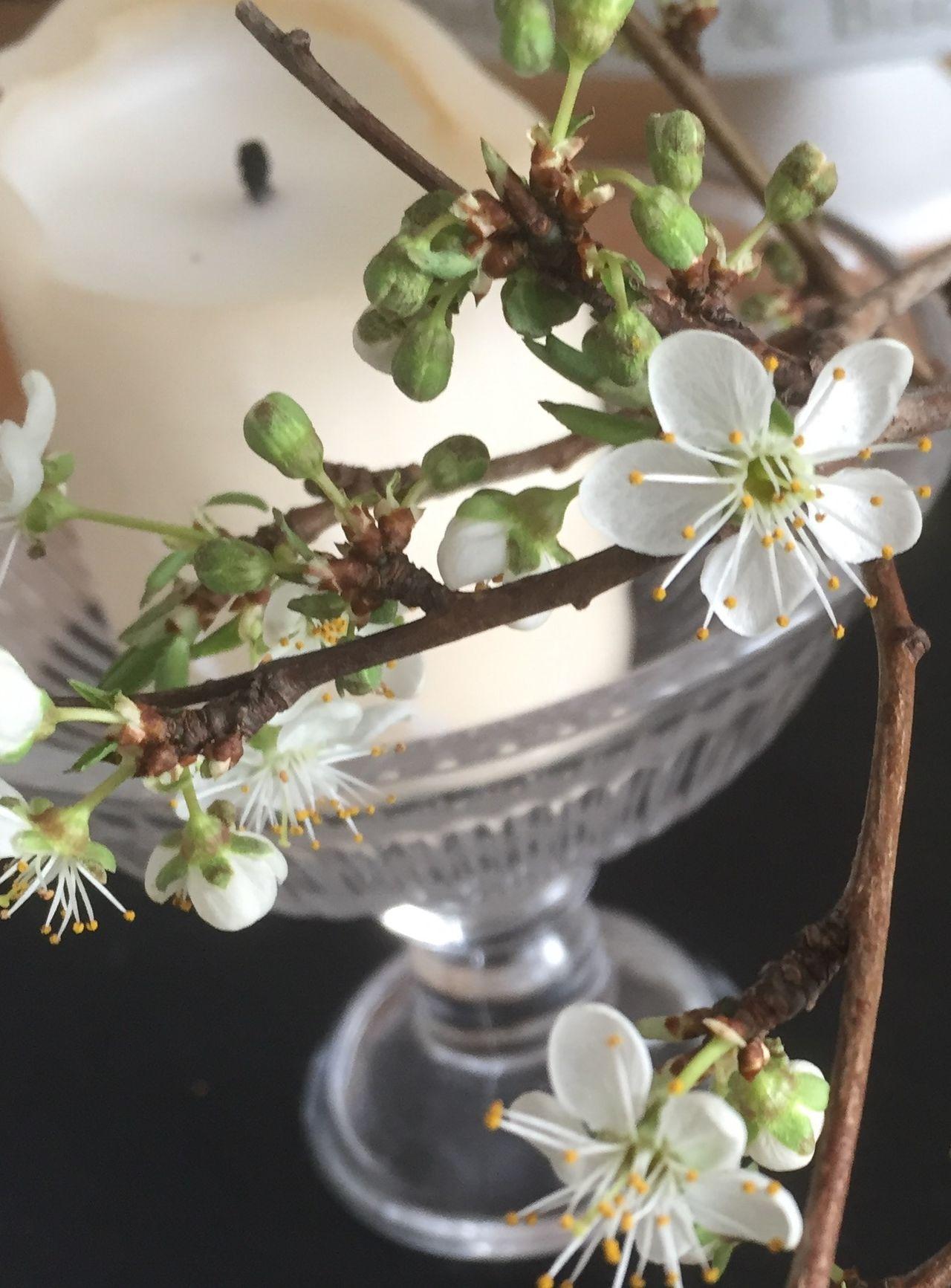 Springtime2016🌾 Spring2016🌾 Frühling2016 Frühling Frühling 2016 🌾 Frühling In Der Vase Blumenpracht🌺🍃 Check This Out Hello World Spring! Springtime Spring Flowers Mirabellenblüte🌾 Spring Plants Flowers Mobileflowers Dekoflowers Dekoflowers Hi!