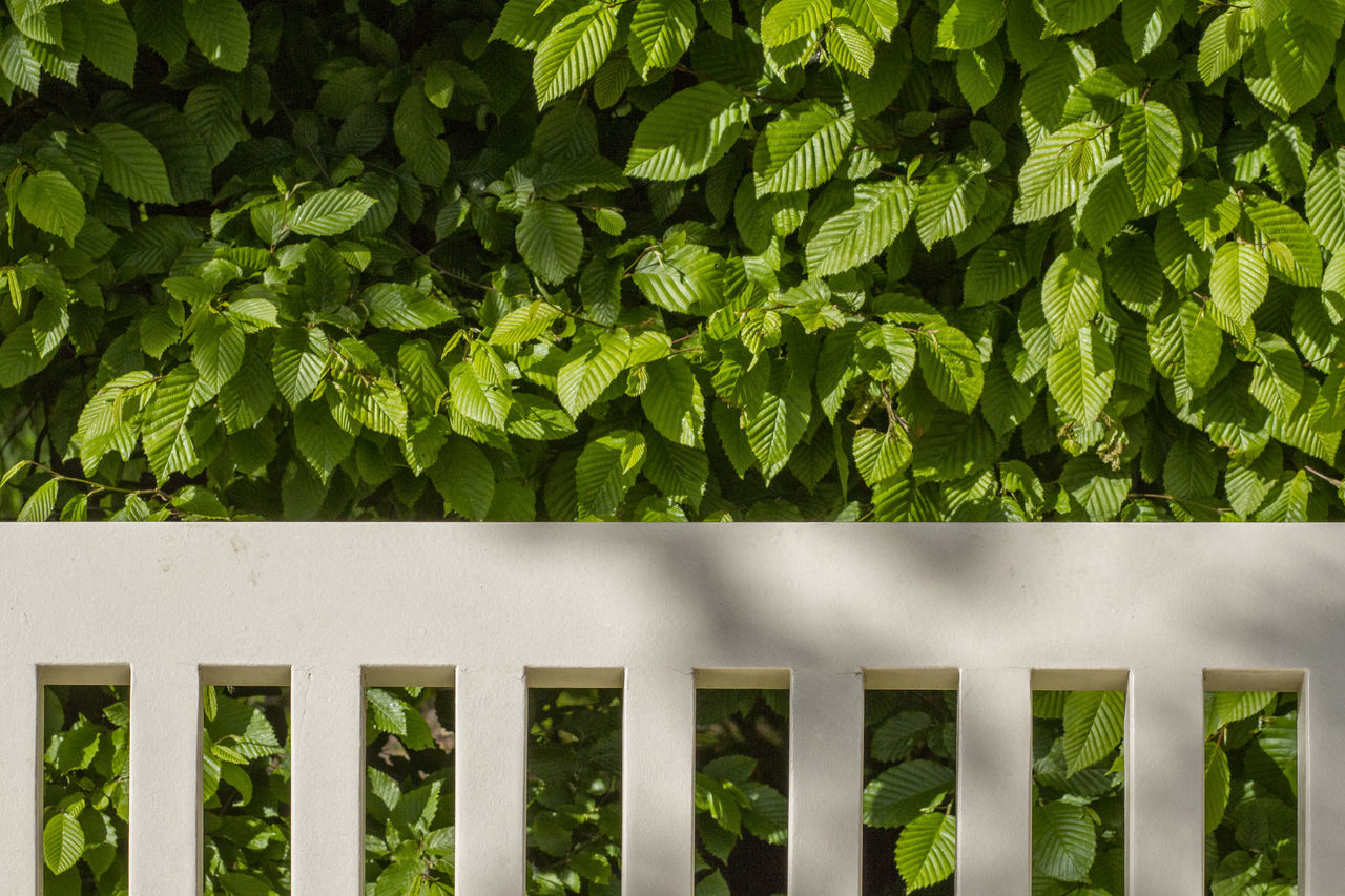 green color, growth, plant, outdoors, day, no people, nature