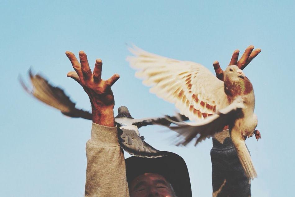 Beautiful stock photos of goodbye, Animal Themes, Animals In The Wild, Bird, Clear Sky