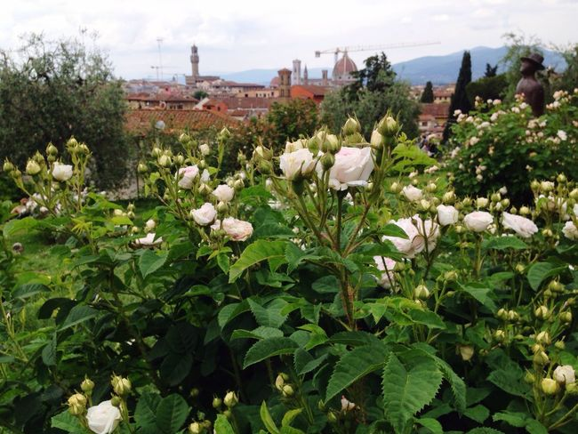Roses Panorama Flowers Firenze Panoramic View Gardens Landscape Cityscapes Viewpoint
