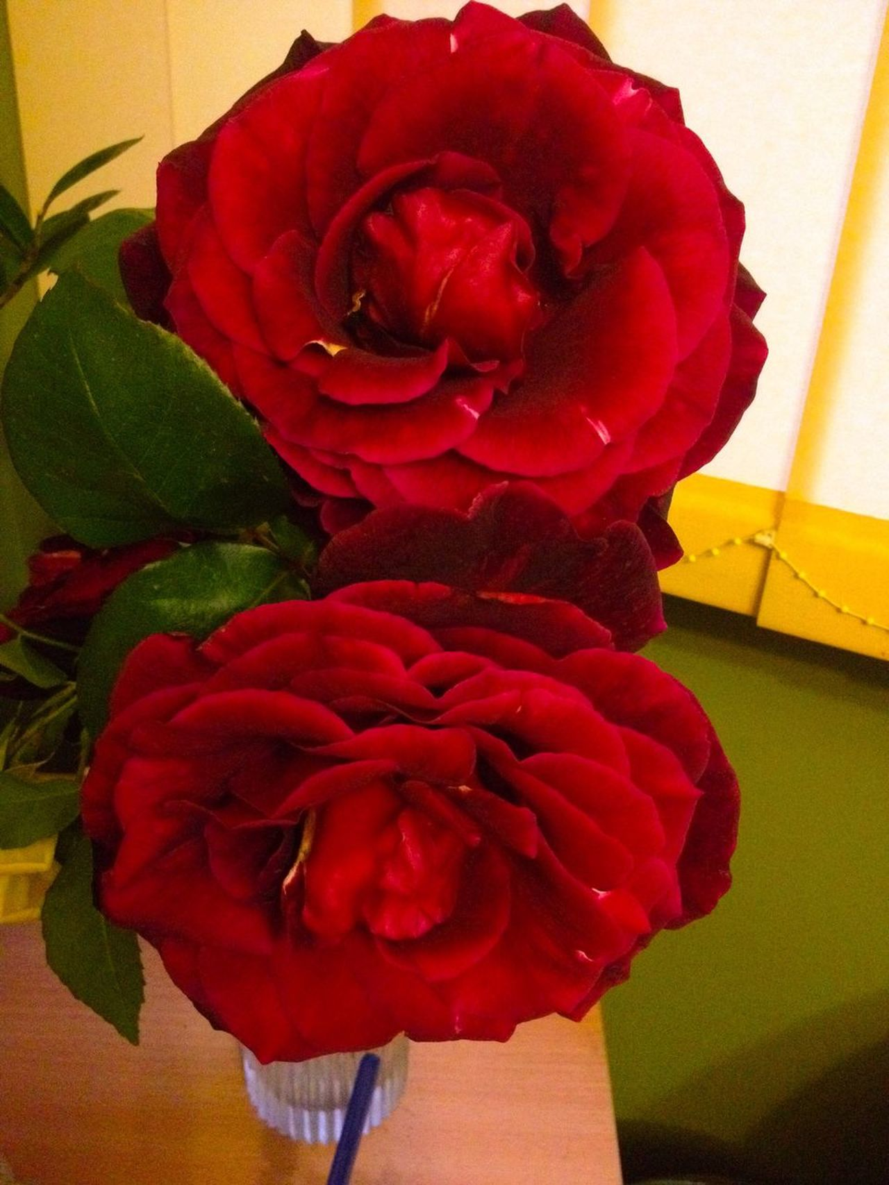 Roses Vase Bouquet Of Roses Bouquet Flowers Red Roses Red Rose♥ Roses Blossom