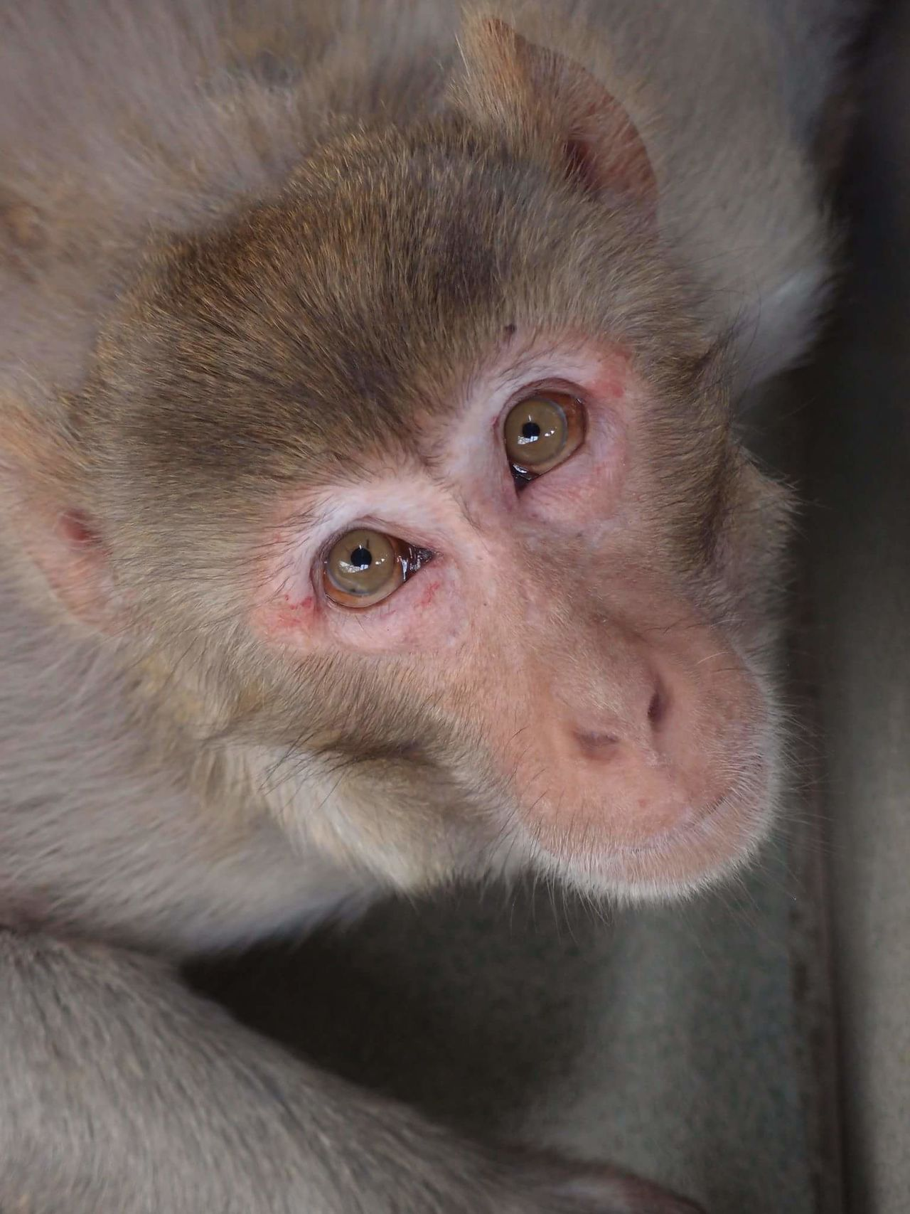 No Filter Monkey Travel Eyes Stare Lookingup Nature Looking At Camera Animal Themes One Animal Mammal No People Day