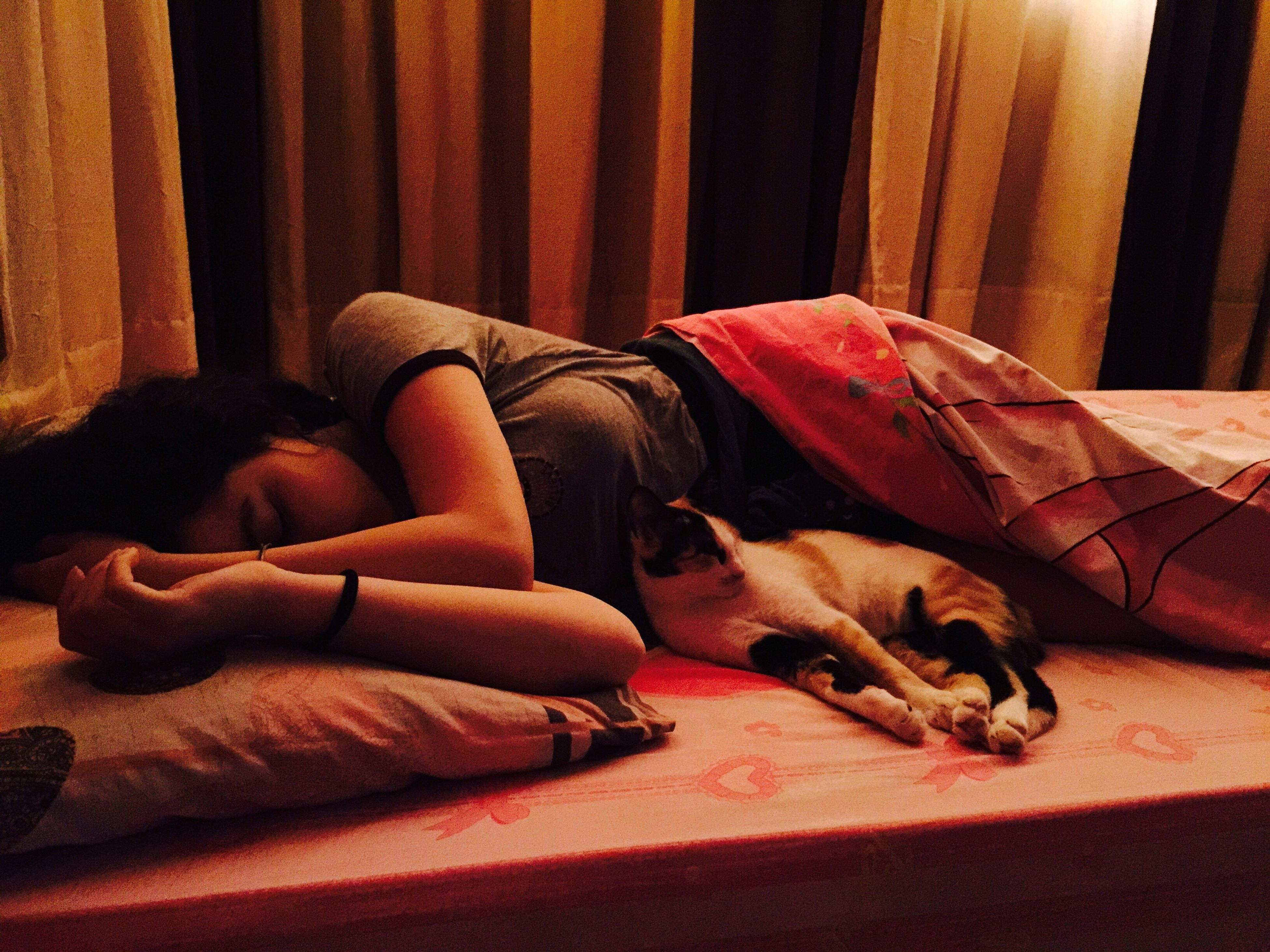 pets, domestic animals, animal themes, mammal, indoors, relaxation, one animal, sleeping, dog, resting, lying down, bed, domestic cat, home interior, sofa, cat, comfortable, blanket, togetherness, eyes closed
