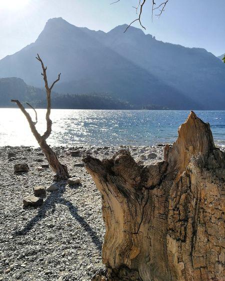 Lakeside Dead Wood First Eyeem Photo