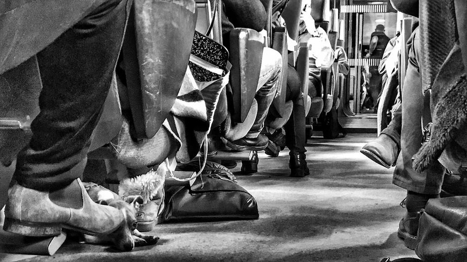 Traveling Home For The Holidays TGV Foot Life Bags Dog Train Noir Et Blanc Iphoneonly EyeEm IPhoneography Eye4photography  Iphonographie Moments Mobilephotography IPhoneography Iphonephotography EyeEm Blackandwhite Bnw Travelling from Massy to Bordeaux