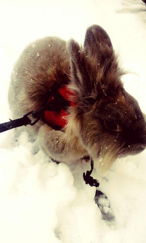 EyeEm Italy Snow FLUFFY BUNNY Bunny