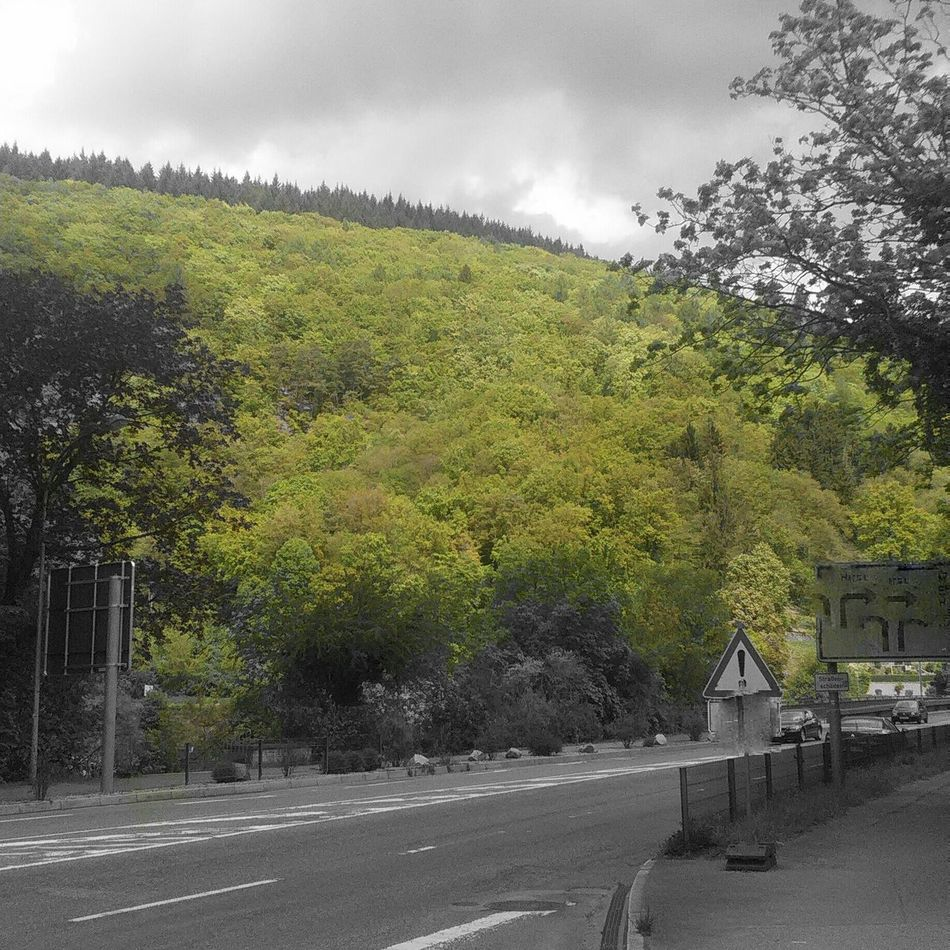 Spring Trees Green First Eyeem Photo