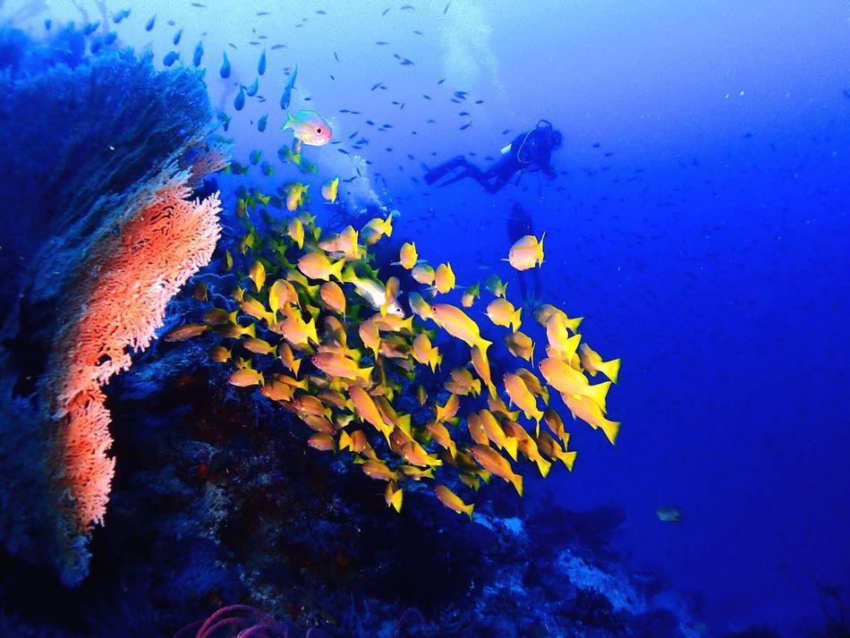 Raja Ampat National Park, 💦💦🐠🐡🐠💦💦, Rajaampat Scuba Diving Diving First Eyeem Photo