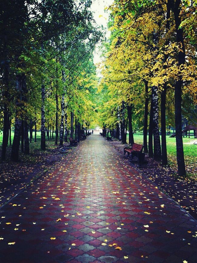 Autumn Nature Scenics All Natural Park - Man Made Space Beauty In NatureNo People Day Long Leafs 🍃 ManyColors Autumn Colors Autumn🍁🍁🍁