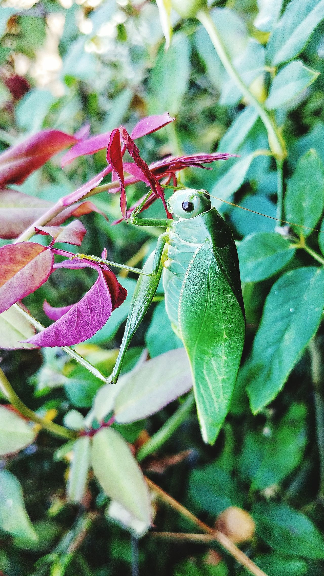 Animals In The Wild One Animal Animal Themes Insect Close-up No People Day Green Color Outdoors Animal Wildlife Nature Leaf