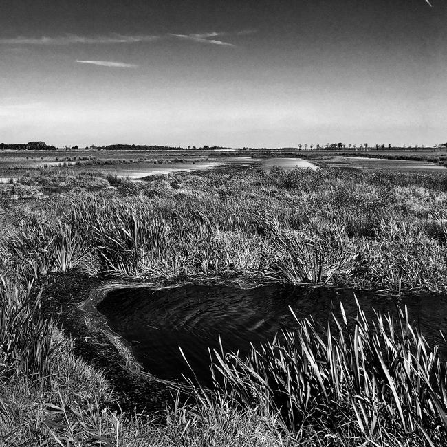 Non-urban Scene Beauty In Nature Tranquility Sky Water Nature Countryside Grass Monochrome Blackandwhite Photography Dutch Countyside Dutch Landscape