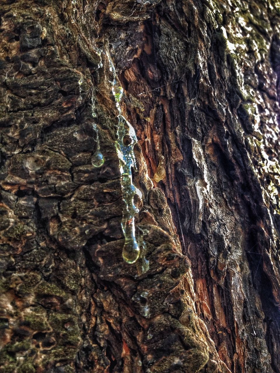 textured, tree trunk, rough, close-up, no people, chain, day, bark, tree, full frame, outdoors, nature, water