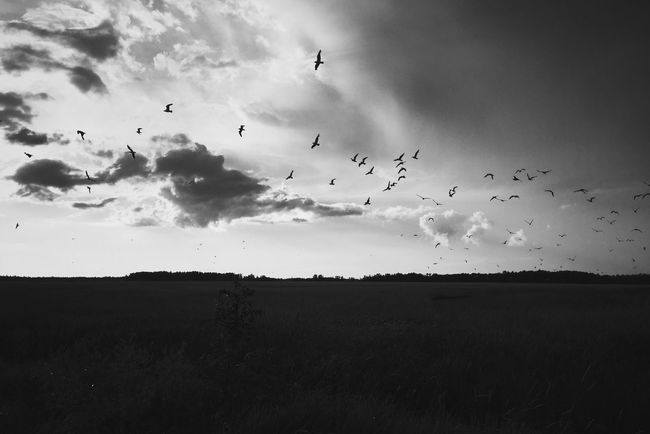 Bird Birds Flying Flat Blackandwhite Black And White Black & White Landscape