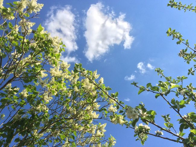 Backgrounds Beauty In Nature Blue Close-up Cloud Cloud - Sky Cloudy Day Green Green Color Growth High Section Leaf Low Angle View Nature Outdoors Scenics Sky Sunny Tranquil Scene Tranquility Tree Treetop