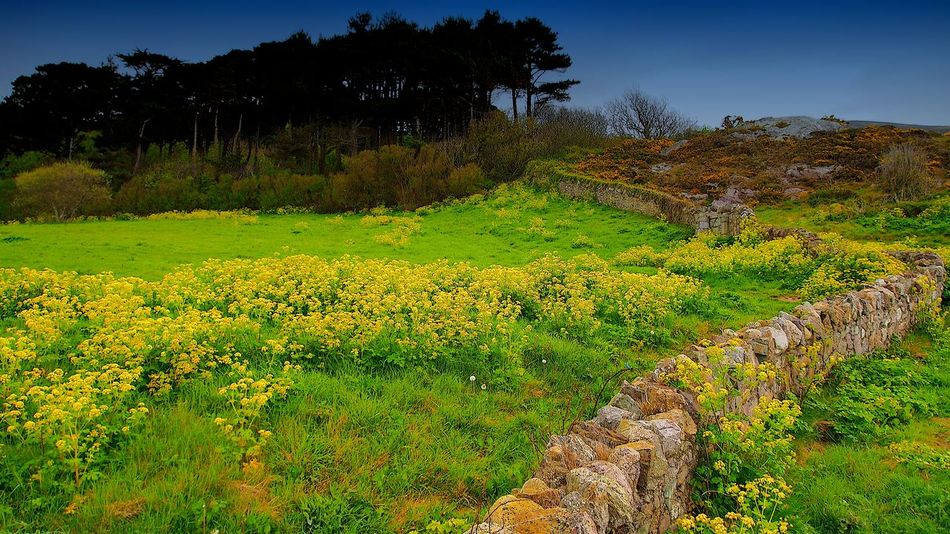 Beauty In Nature Day Growth Hiking Landscape Mountain Nature No People Outdoors Plant Scenics Sky Tranquil Scene Tranquility Tree Yellow