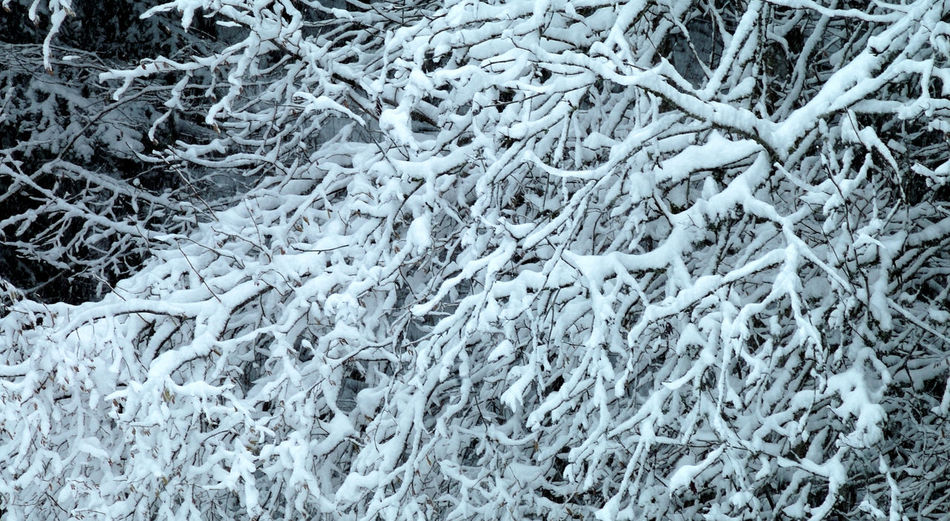 Blanc Branch Branchage Double Exposure Hiver Montagne Musyacat Neige No People Outdoors Season  Snow Tree Trunk Val De Morteau Winter