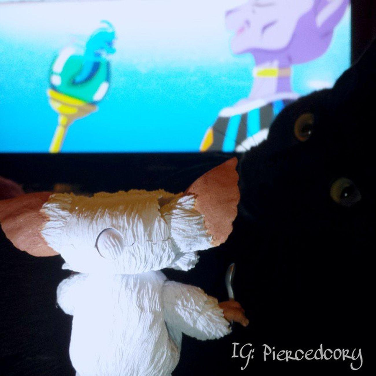 Dammit Gary! Cats are friends not food! Now just watch the movie. My1anubis FunWithMogwaiGary Instacat Dragonballzbattleofgods DBZ Rescue BLackCat