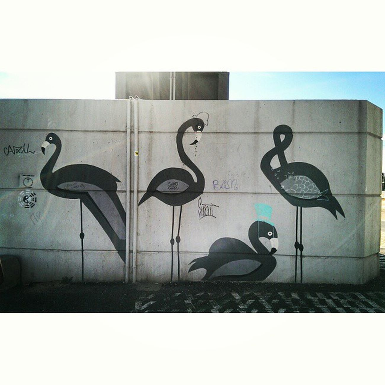 Little flamingos in Lisboa ⚓ Portugal Lisbon Lisboa Holidays SunnyDay Tage withthebff touristes
