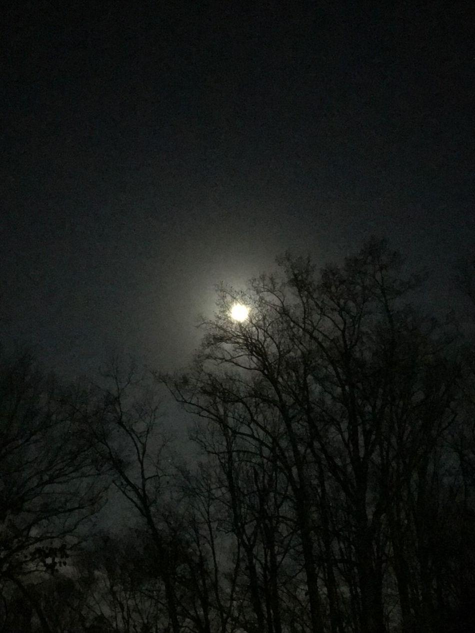 Full Moon Sky Tree Tranquility Friday The 13th Night Nightphotography Night Sky Night Skys Beauty Of The Night Night Moon