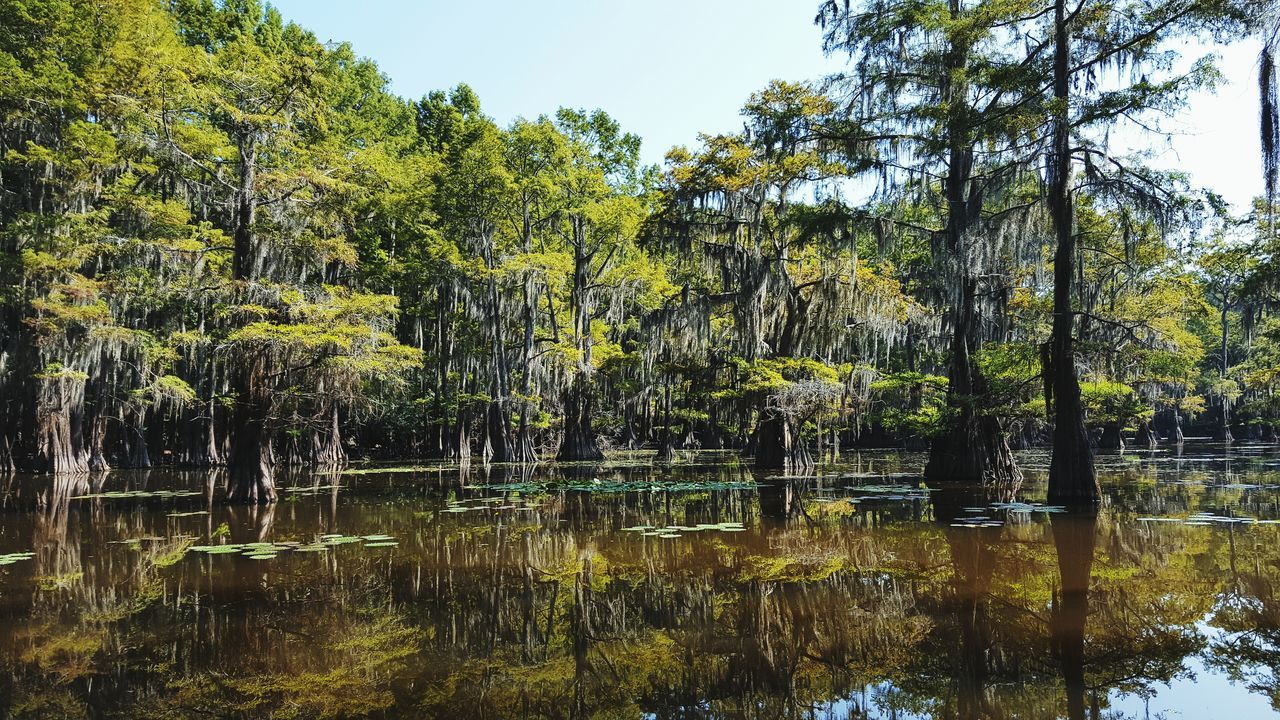 Caddo Lake Cypress Trees  Waterscape Reflections The Great Outdoors - 2017 EyeEm Awards