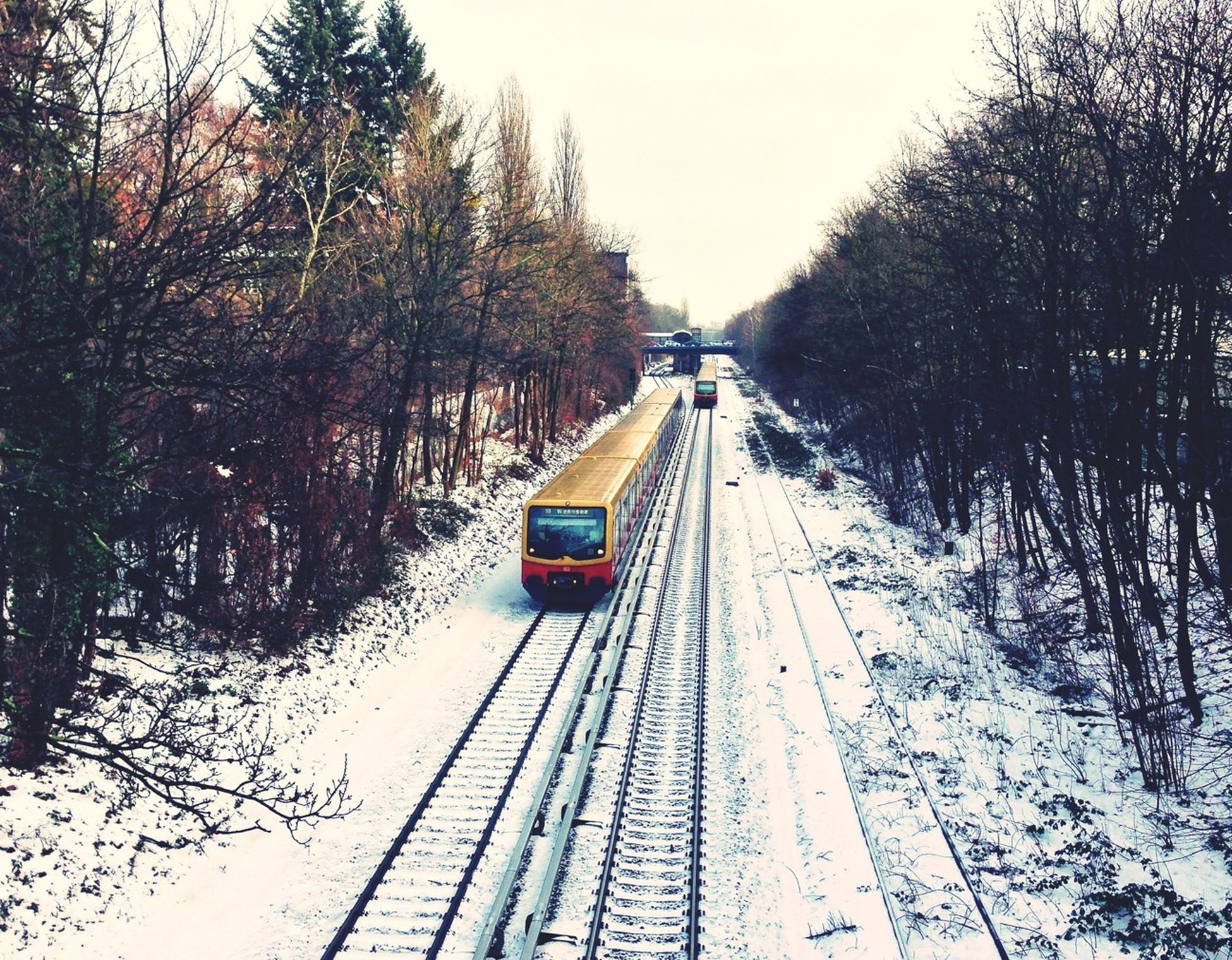 transportation, tree, the way forward, diminishing perspective, snow, mode of transport, vanishing point, winter, clear sky, cold temperature, forest, season, travel, nature, bare tree, road, tranquility, tranquil scene, weather, railroad track