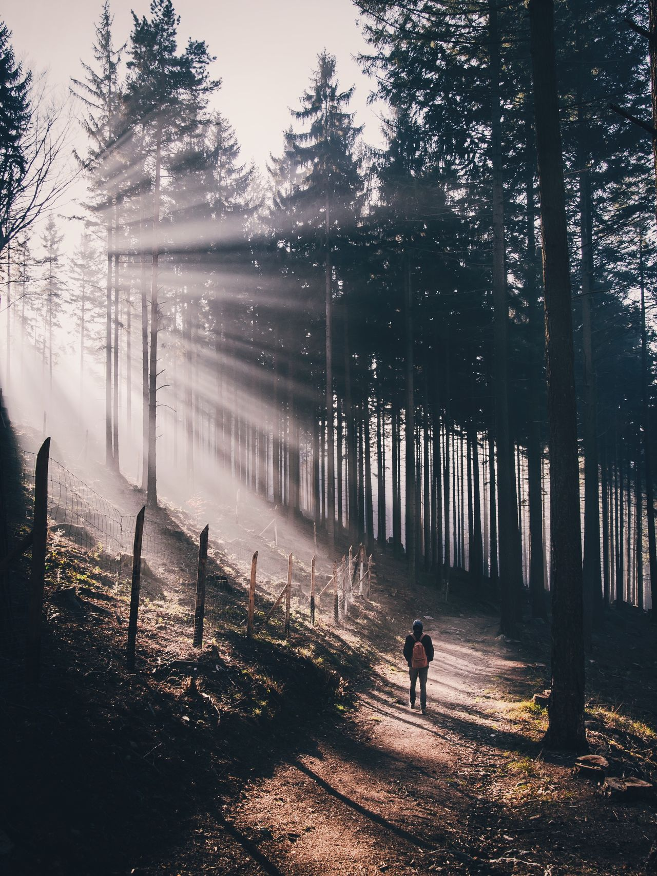 Finding New Frontiers Tree Nature Lifestyles Real People Full Length Beauty In Nature One Person Outdoors Leisure Activity Men Scenics Growth Tranquility Tranquil Scene Forest Fog Day Sky People Mammal