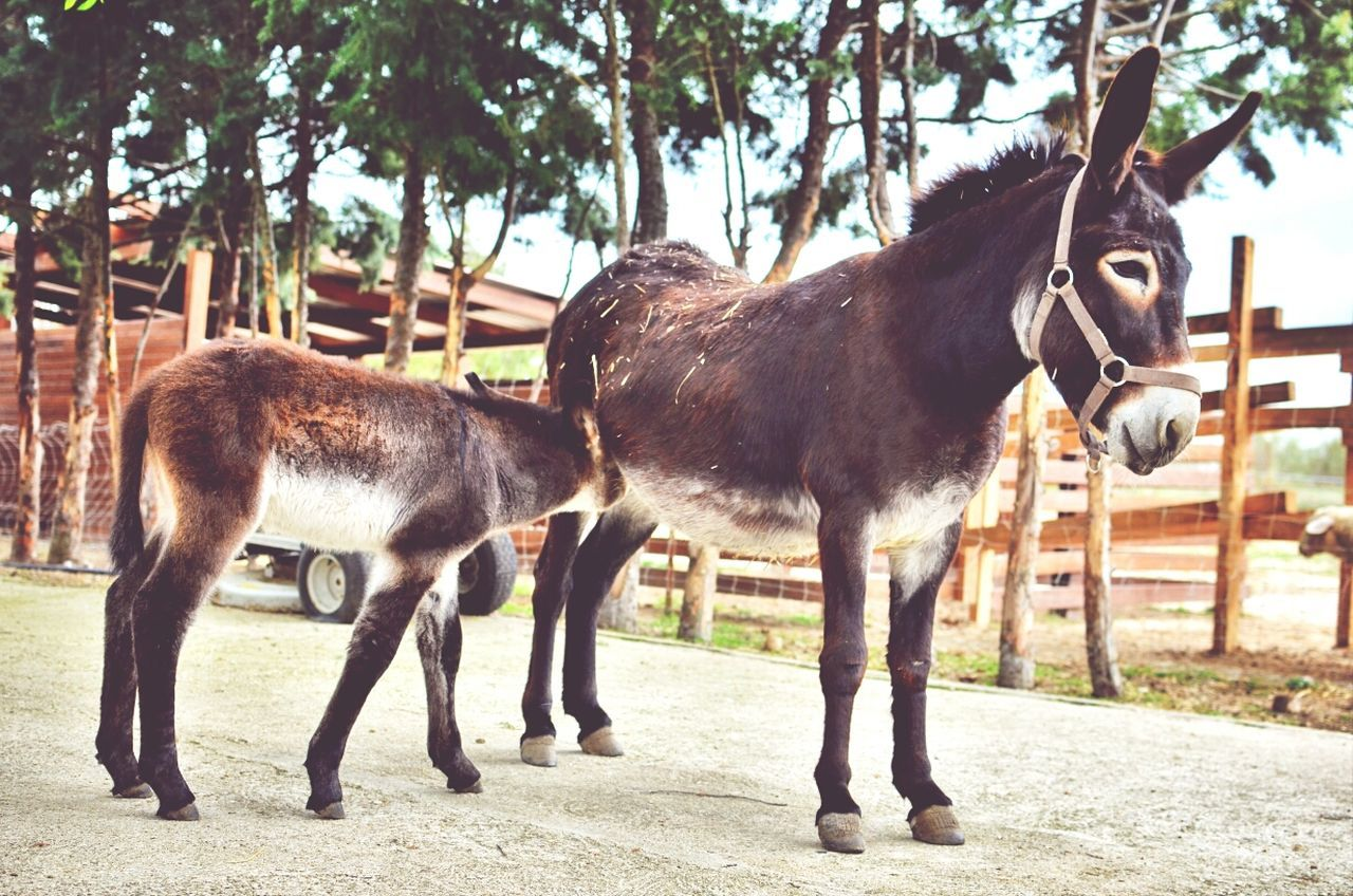 Beautiful stock photos of donkey, Animal Family, Animal Pen, Animal Themes, Bonding