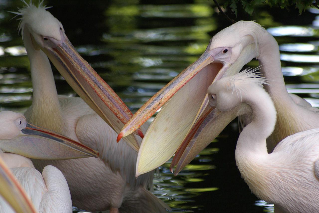 Beautiful stock photos of jungle, , Animal, Bird, Environment