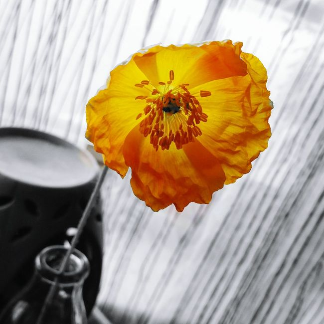 Poppy Popofcolor Delicate Mygarden Ms Poppy J