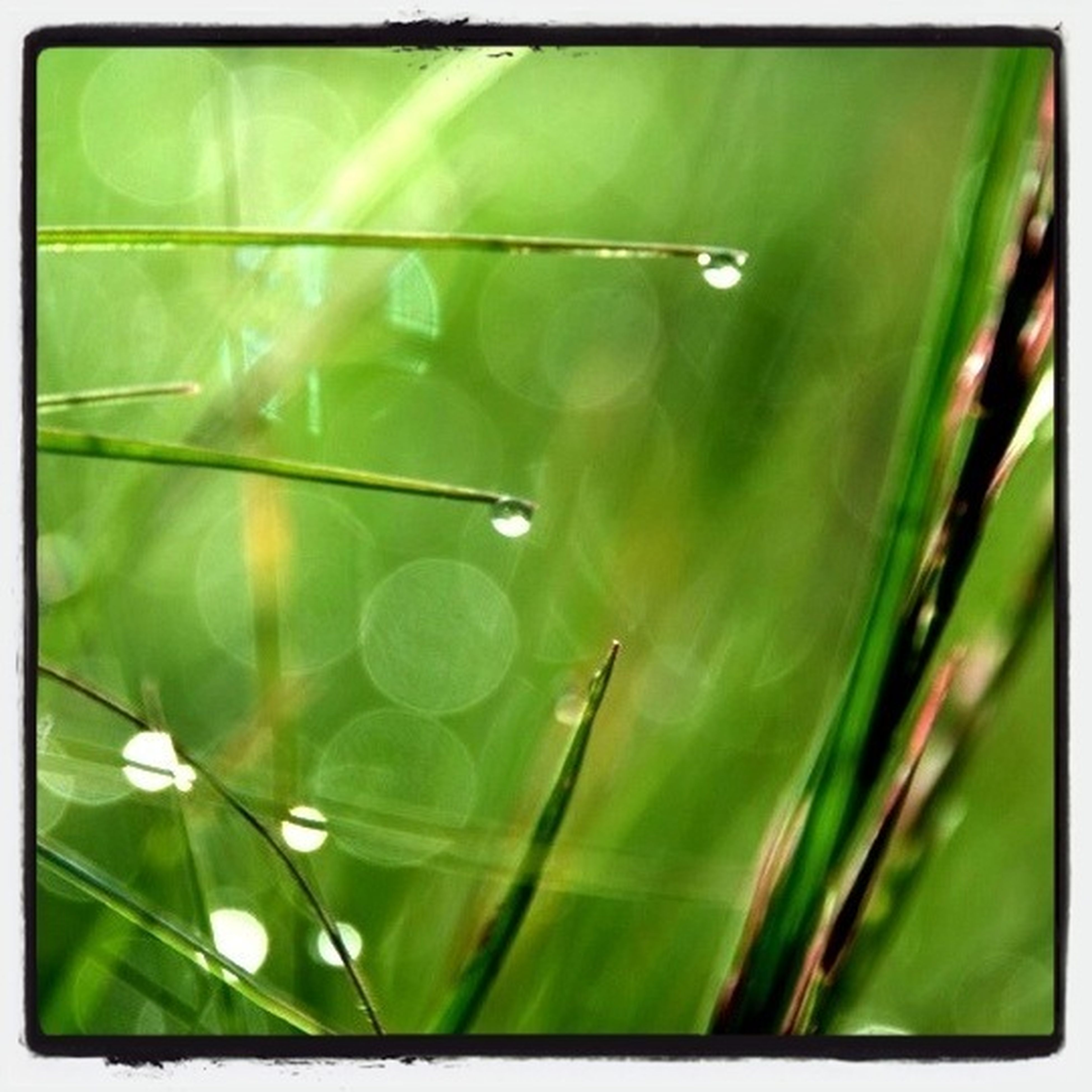 transfer print, growth, freshness, close-up, fragility, auto post production filter, green color, plant, nature, beauty in nature, drop, water, focus on foreground, flower, dew, stem, wet, green, day, no people