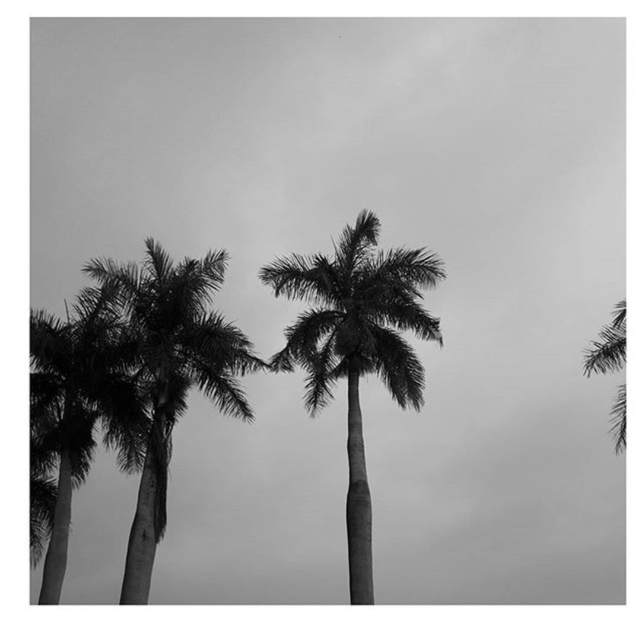 - Never give up great things take time. Instamood Instapic Blackandwhite Photography Trees Cloudy Igersmauritius