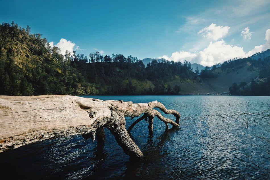 Beautiful stock photos of lake, , Beauty In Nature, Day, Dead Plant