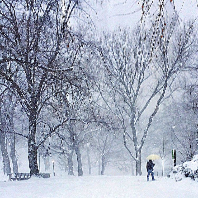 Winter Wanderings NYC Central Park Winter Snow Blizzard 2015 Snowstorm Blizzard Nature_collection Newyorkcity Nature