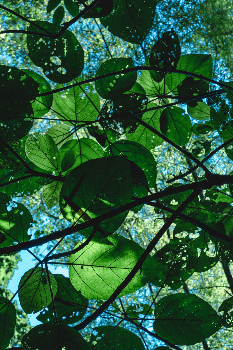 Backgrounds Beauty In Nature Branch Day Fine Art Photography Forest Freshness Green Color Growth Jungle Leaf Low Angle View Mexico Nature Nature Nature Photography Nature_collection No People Outdoors Patterns In Nature San Luis Potosí Tree Xilitla Art Is Everywhere
