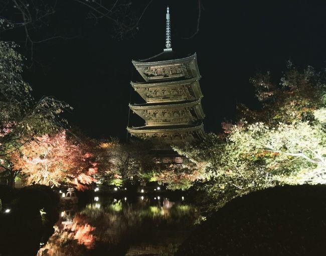 東寺 京都 Kyoto ライトアップ Kyoto Autumn Enjoying Life Kyototrip Relaxing Kyoto, Japan Illuminated Hello World Autumn