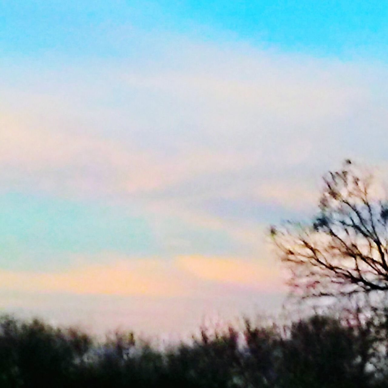 nature, beauty in nature, sky, tranquility, tranquil scene, no people, scenics, outdoors, sunset, low angle view, tree, growth, day, scenery, close-up