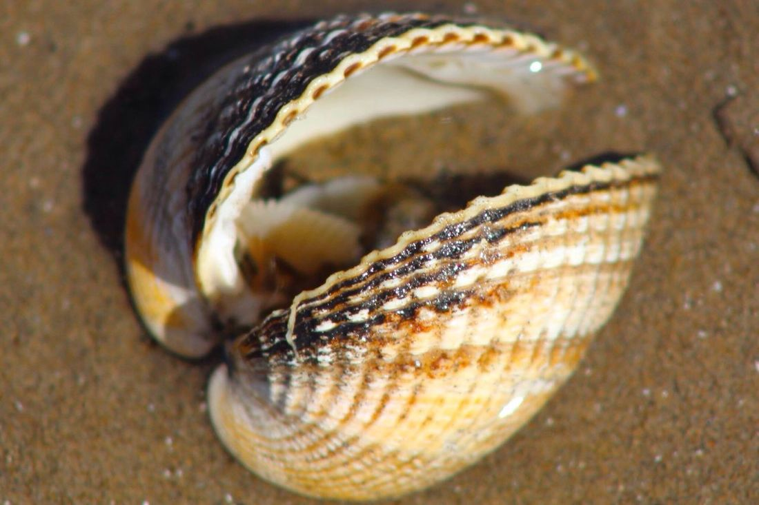 Sand Sand & Sea Seashells Seashell Seashell, By The Sea Shore Seashells, Rocks, Sand Seashells From The Seashore Seashell Close-up Seashell Shells🐚