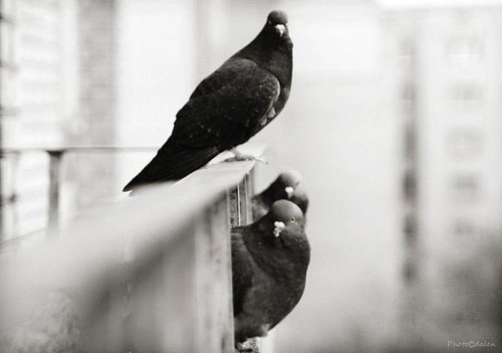 Pets Corner Birds Bird Romadalen WhatsApp B&w