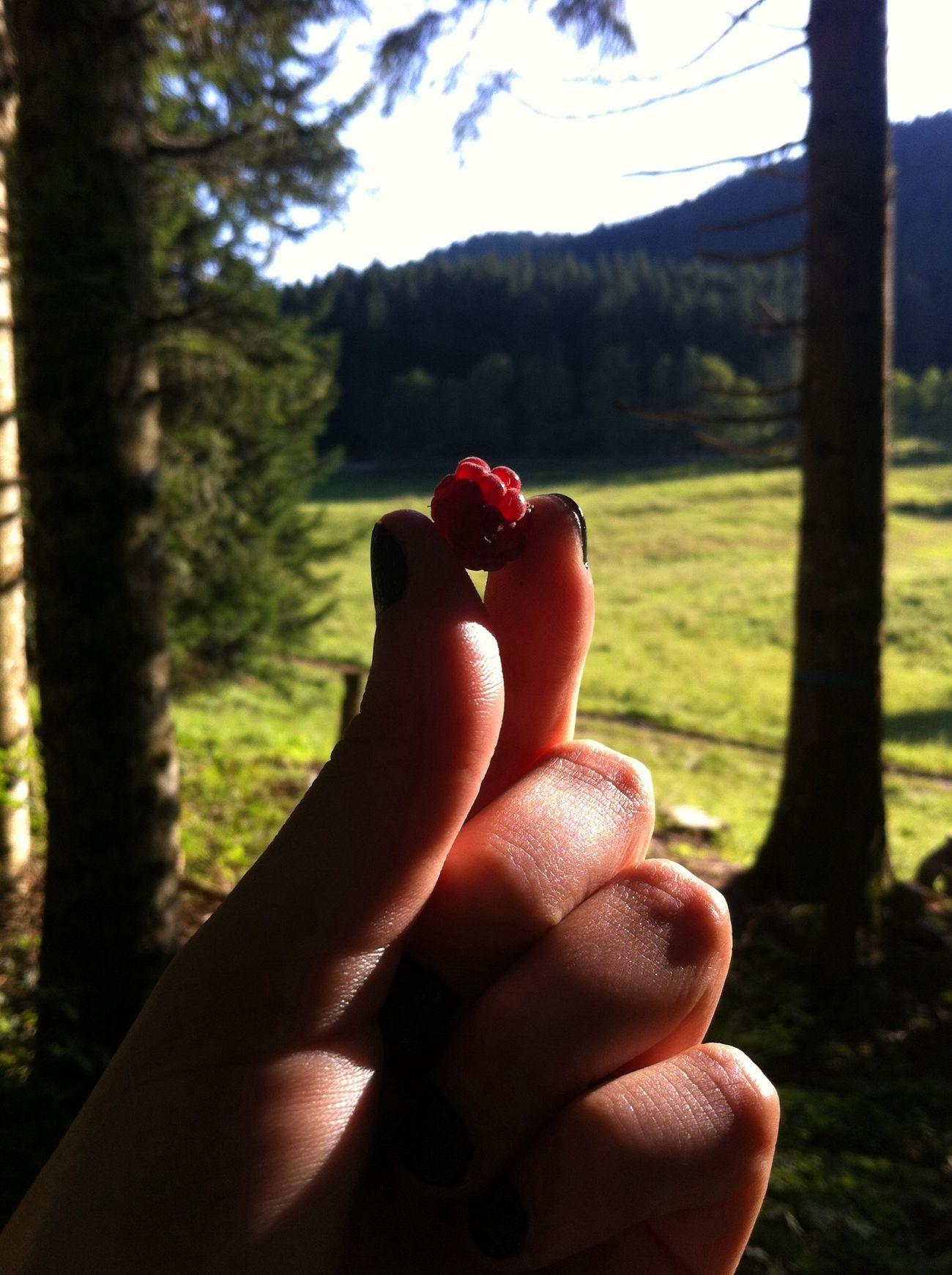 Lampone Wood Non So Cosa Scrivere Italy