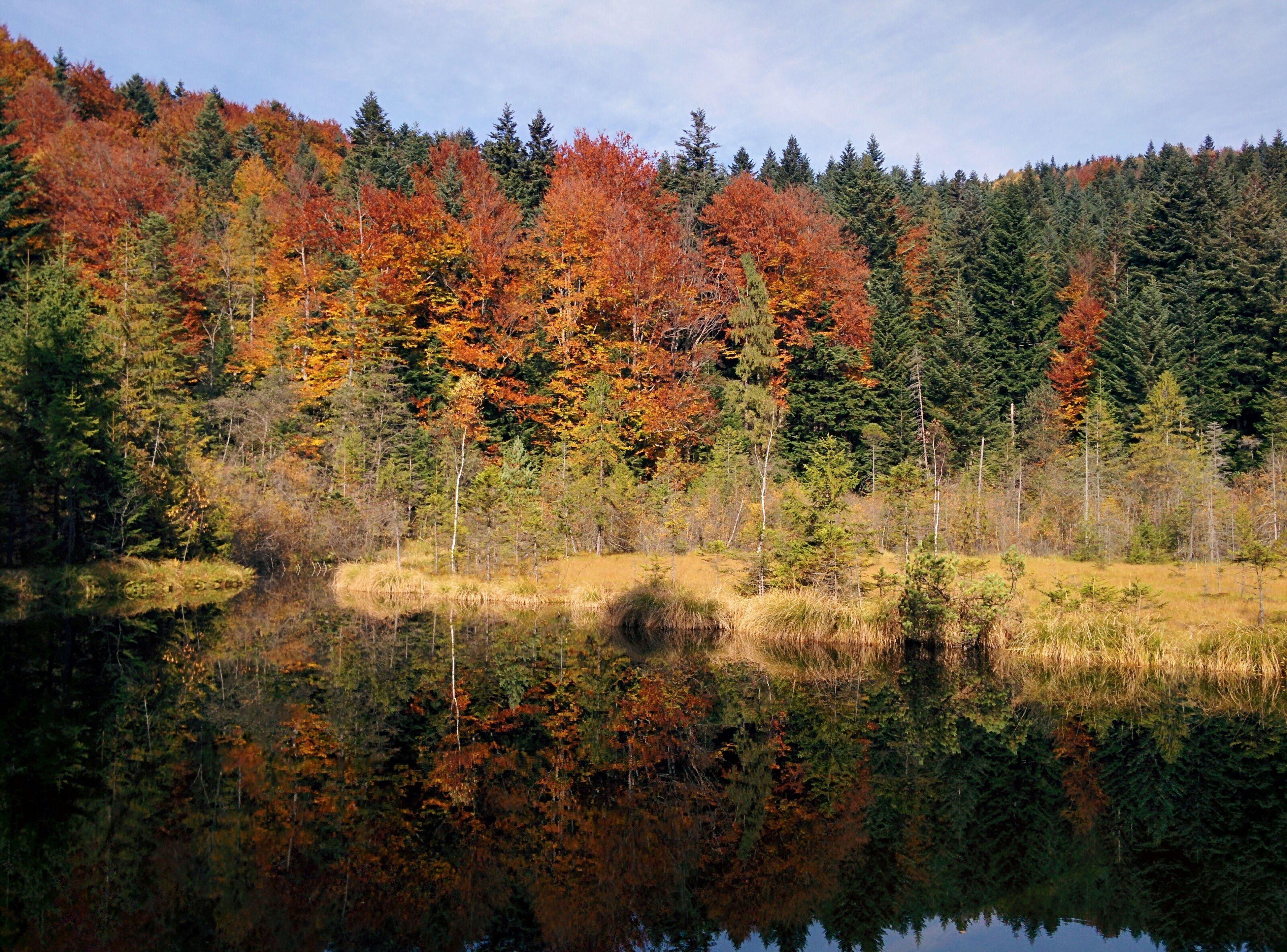 Deadlake Lake Skole Karpaty