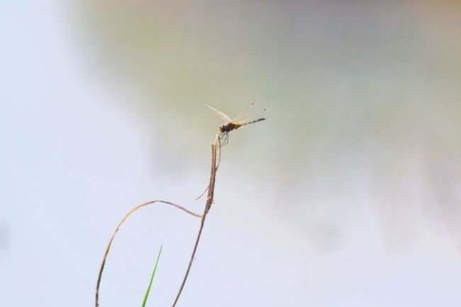Dragonfly Nature Photography EyeEm Nature Nature_collection