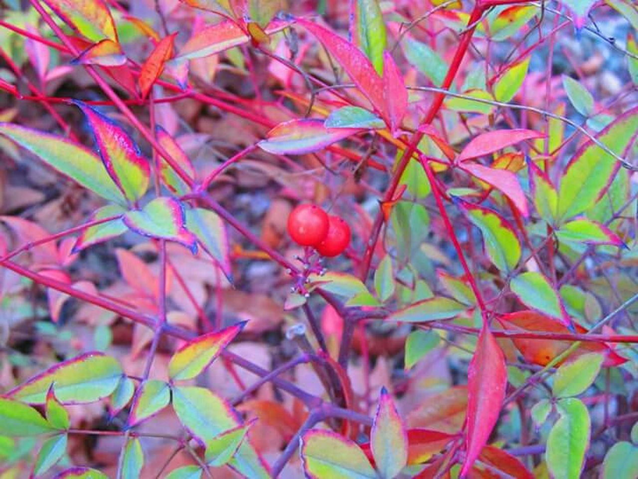Red Loveit Autumn Autumn Leaves Redgreen Learn & Shoot: Leading Lines Canon Sx150