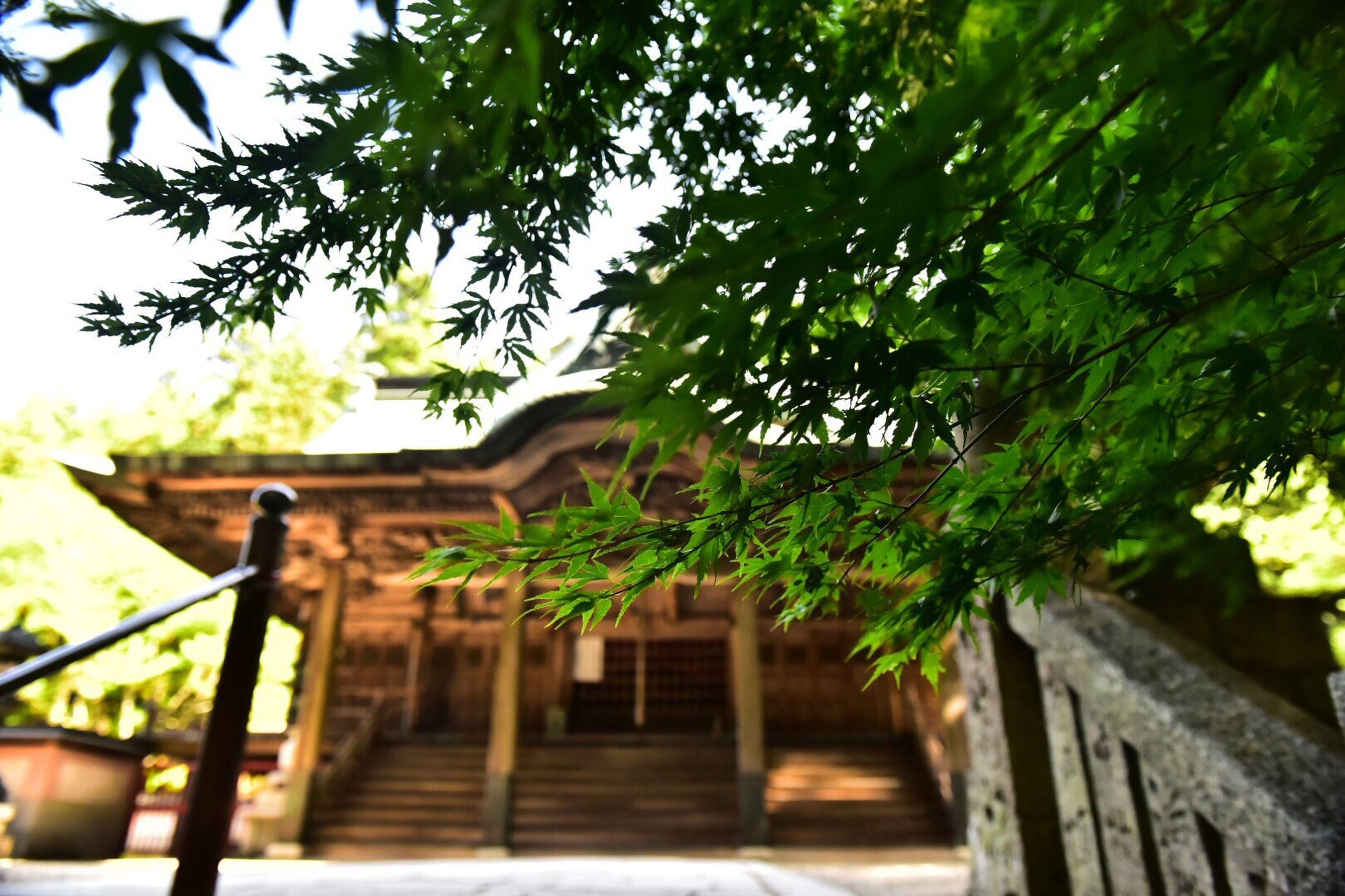 箸蔵寺 Japan Photos Japan Photography TeamWestJapan TeamTokushima 徳島県 新緑