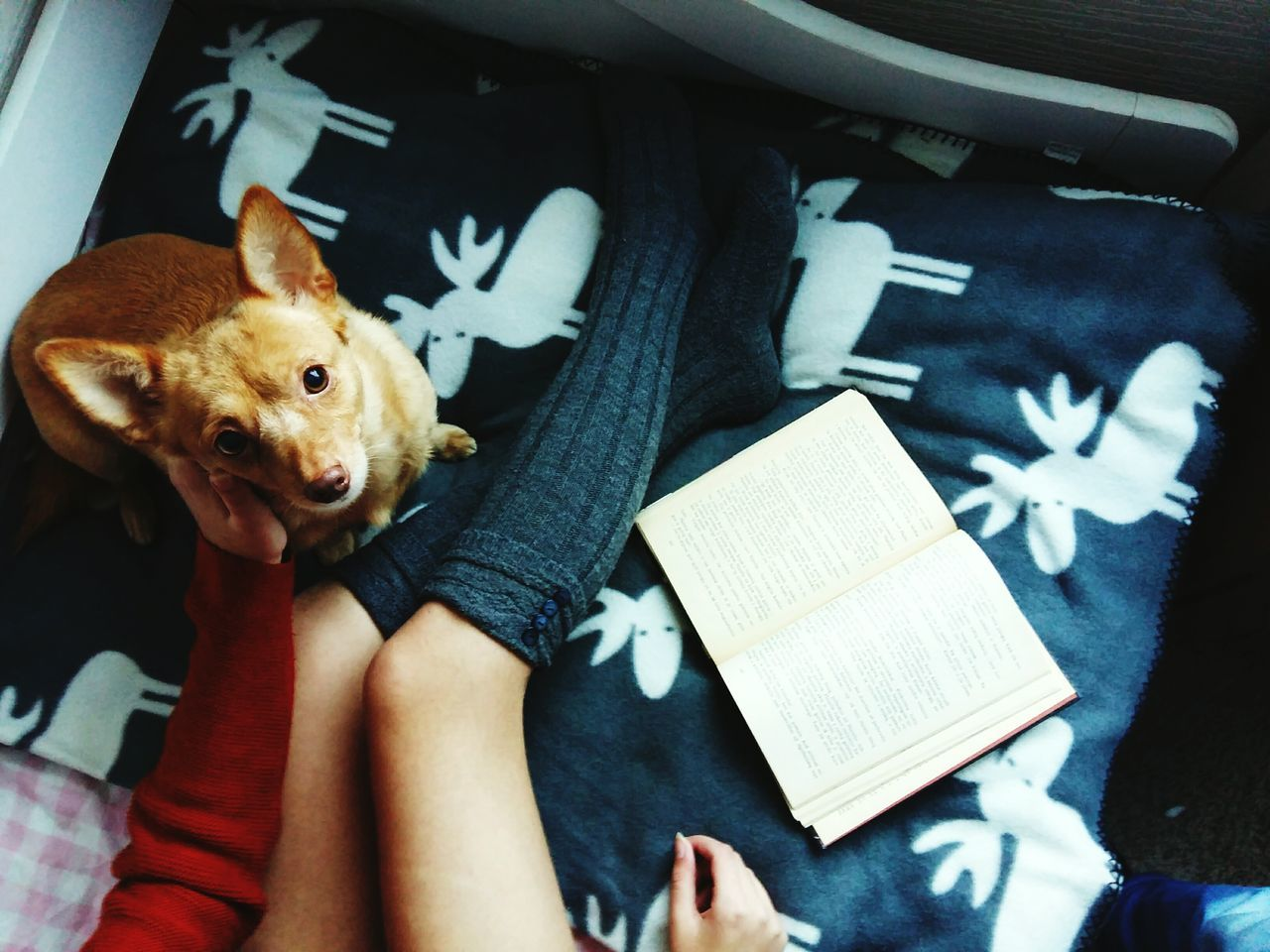 Always Be Cozy Dog Pets One Person Indoors  One Animal Day Looking At Camera Cozy At Home Cozy Cozytime Domestic Animals Animal Themes Mammal People Adult Human Body Part