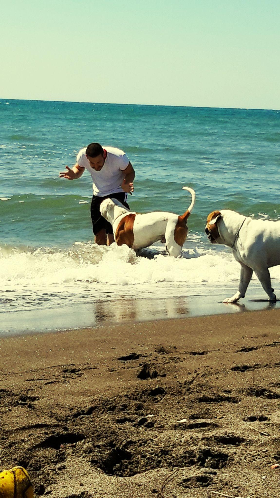 Manolo Congo Ilovemydog American Bulldog Super Dog Bulldog Al Mare Wow *-* Sammer Primo Bagno