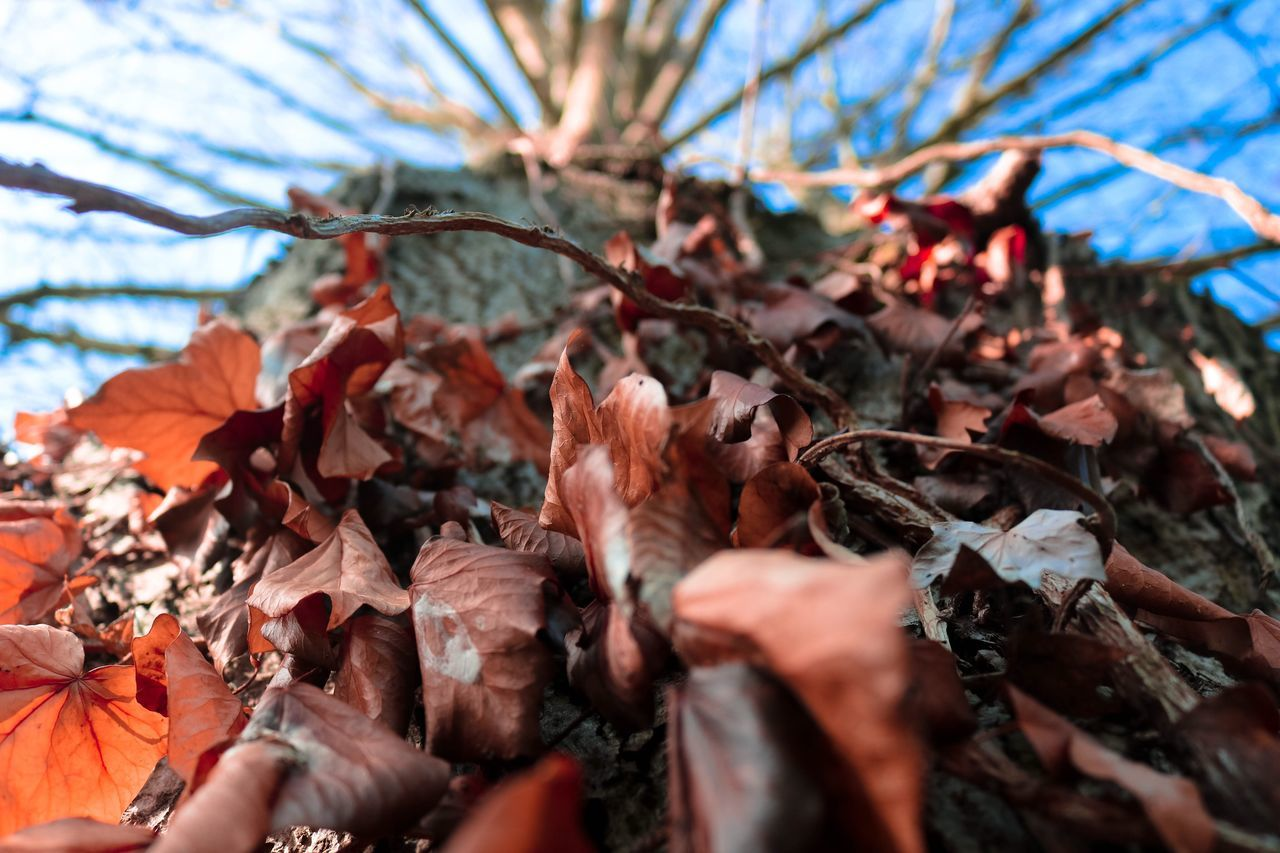 Orange leaves 🍂 || Fall EyeEmNewHere Leaf Tree Nature Red Orange Color Wildlife Outdoors Outdoor Photography Wild Beauty In Nature Livefolk Tranquil Scene No People Autumn Fall Blue Sky