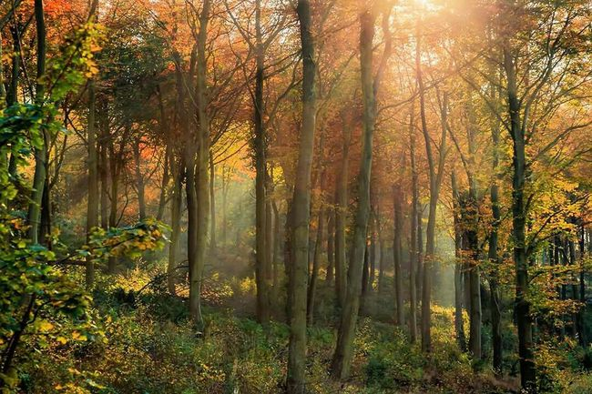 Autumn Taking Photos Landscape_Collection EyeEm Best Shots Nightphotography Autumn Colors Nature_collection EyeEm Nature Lover Sunrays Nature Photography